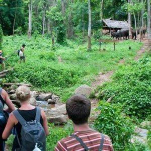 Cuc Phuong National Park Ninh Binh Tourist Center Vietnam