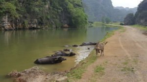 Ninh Binh Tourist Center - Vietnam - What to do in Ninh Binh