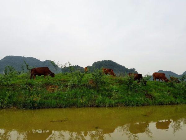 Countryside tour Ninh Binh Vietnam